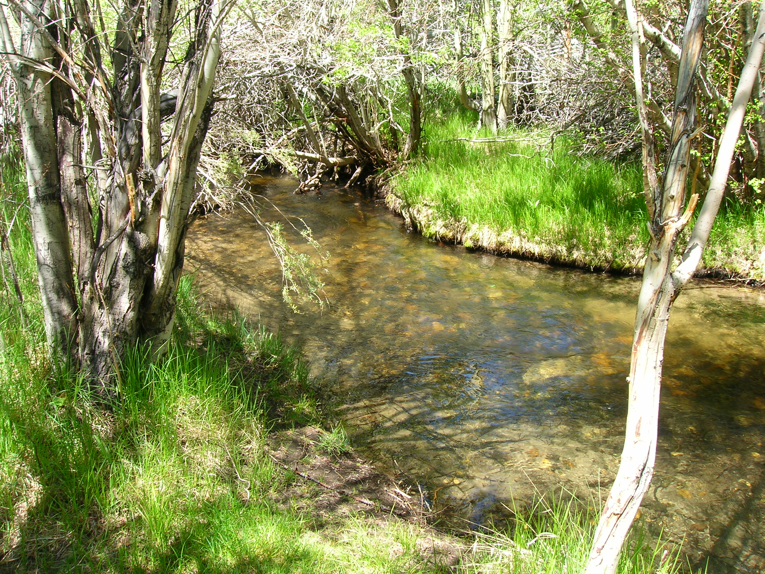 Mike 39 s fishing blog fishing camping and other outdoor for Bishop creek fishing